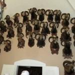 Hradní sbírky rohů